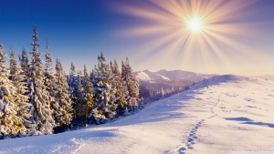footprints_in_the_snow_2-wallpaper-1366x768